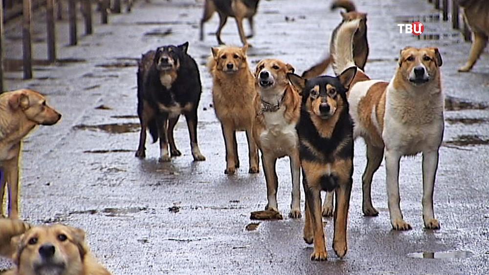 Собачий приют