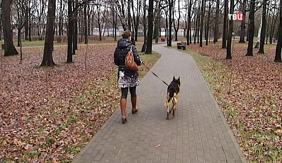 Выгул собак