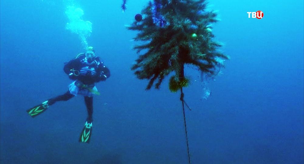Дайвер устанавливает Новогоднюю елку в озере Байкал