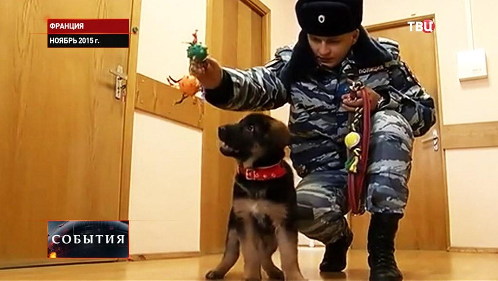 Щенок Добрыня, переданный в дар французской полиции