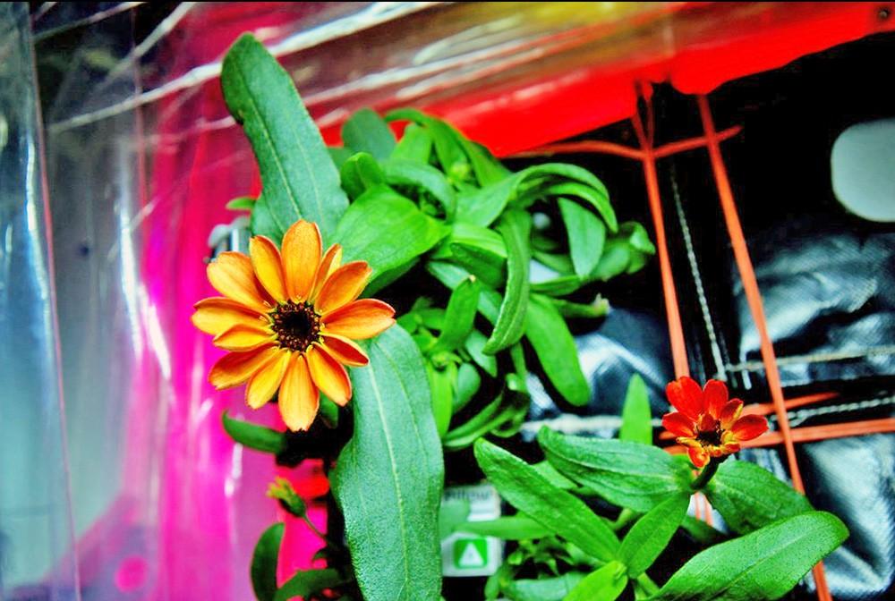 Цветы на МКС