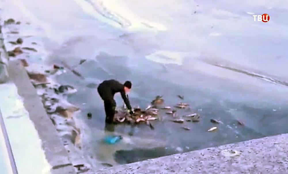 Ловля рыбы у канализационных сливов
