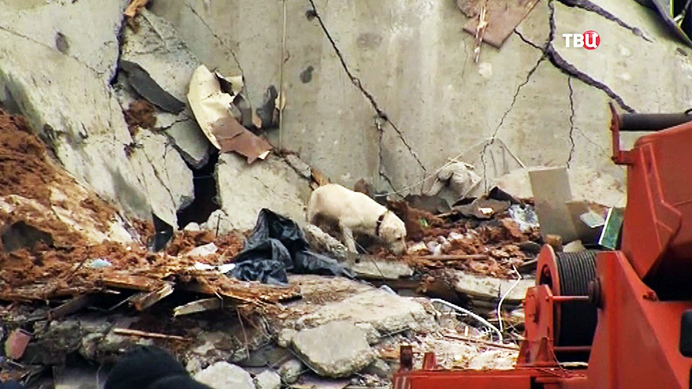 Кинологическая служба МЧС на месте обрушения многоквартирного дома