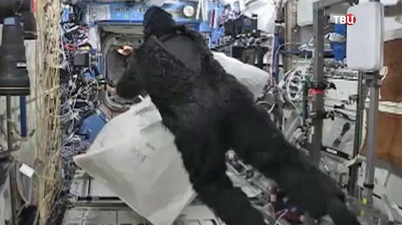 На борту МКС разыгрывают побег от гориллы