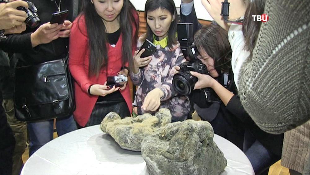 Журналисты фотографируют останки пещерного львенка