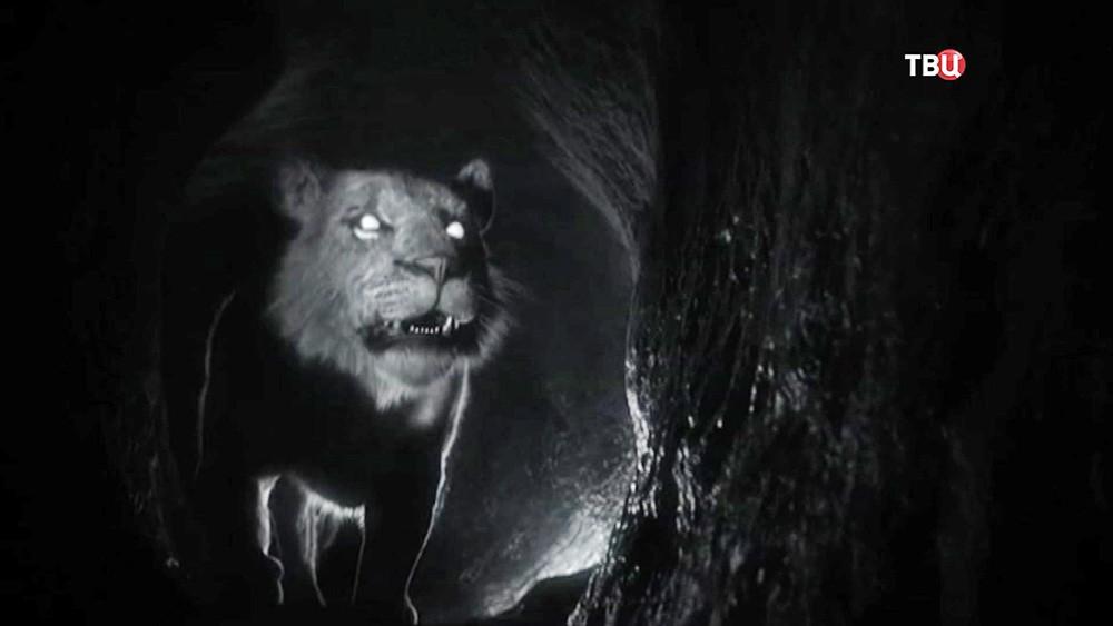 Смоделированный облик пещерного льва