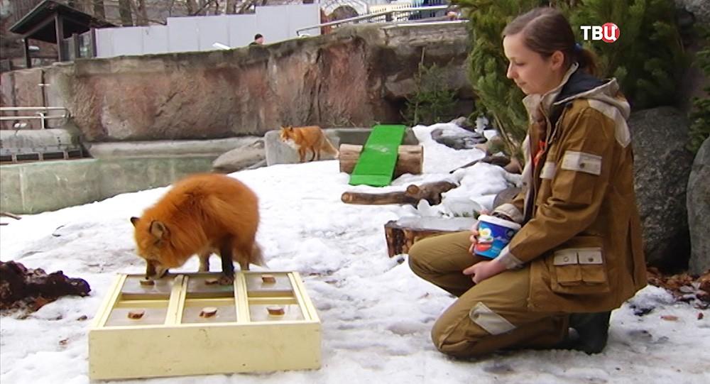 Лиса в Московском зоопарке