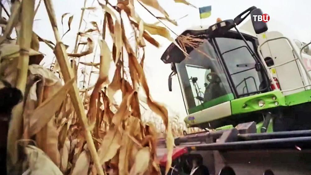 Сбор урожая на Украине