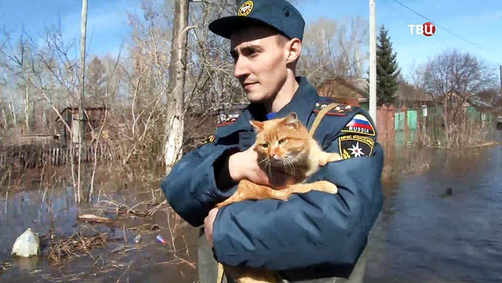 Сотрудники МЧС эвакуируют животных из зоны паводков