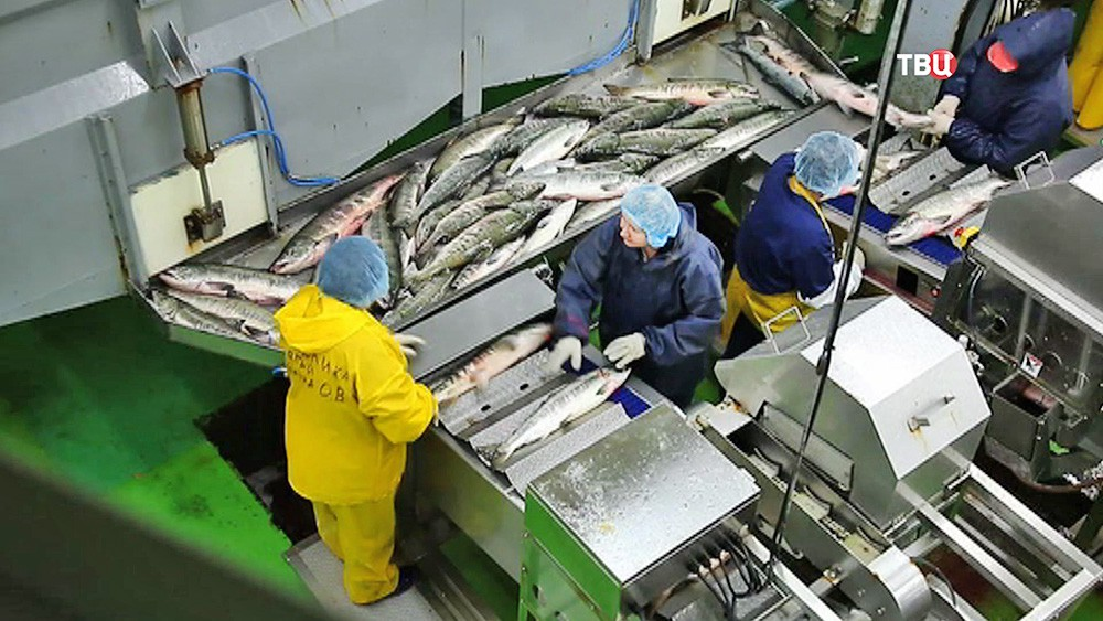 Рыбоперерабатывающий комбинат