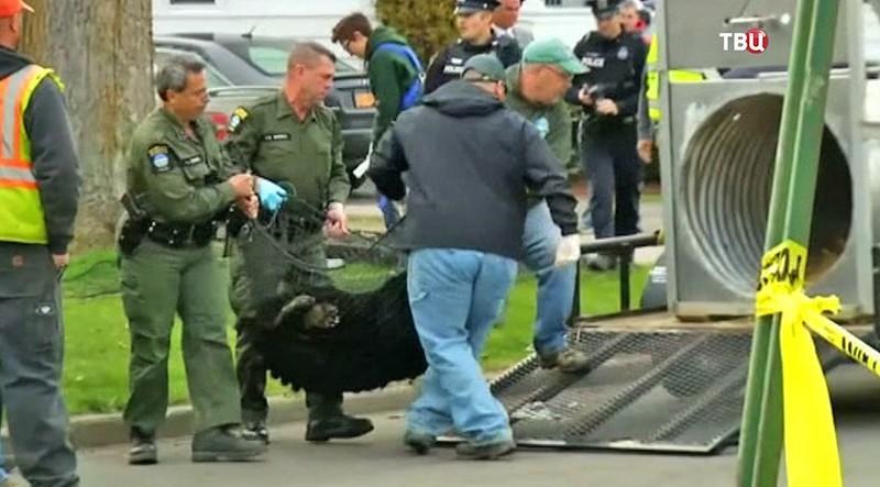 Спасатели сняли с дерева медведя