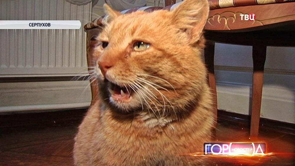 Кот в музее Серпухова