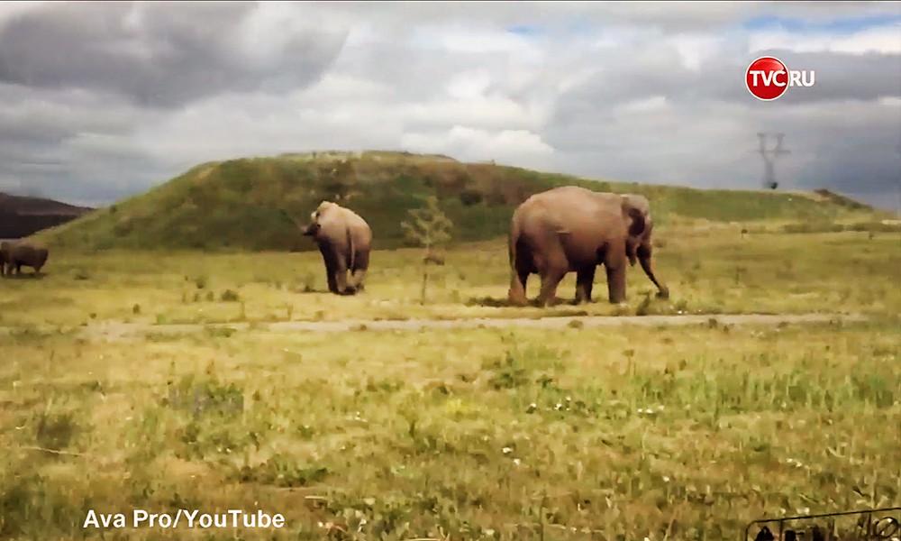 Слоны в Магнитогорске