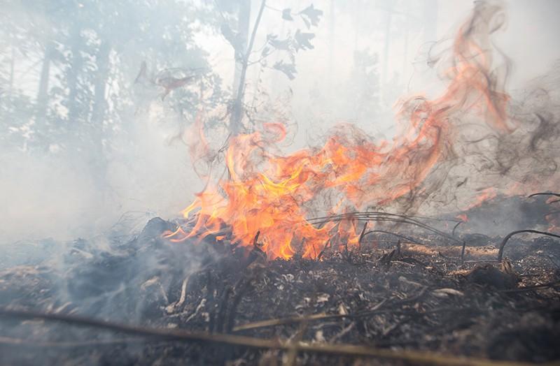 Лесной пожар в Амурской области
