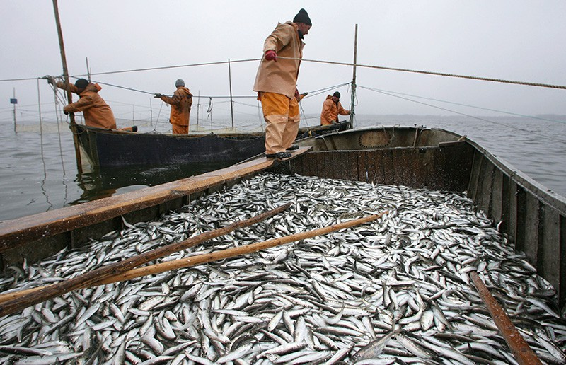 Рыбаки ловят салаку в Калининградском заливе