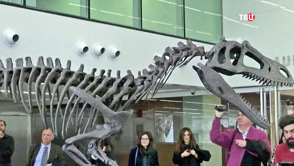 Скилет динозавра