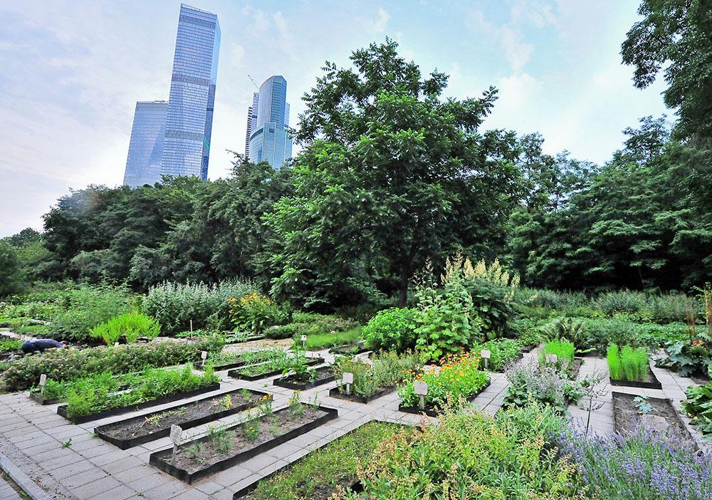 "Ботанический сад возле ""Москва-Сити"""