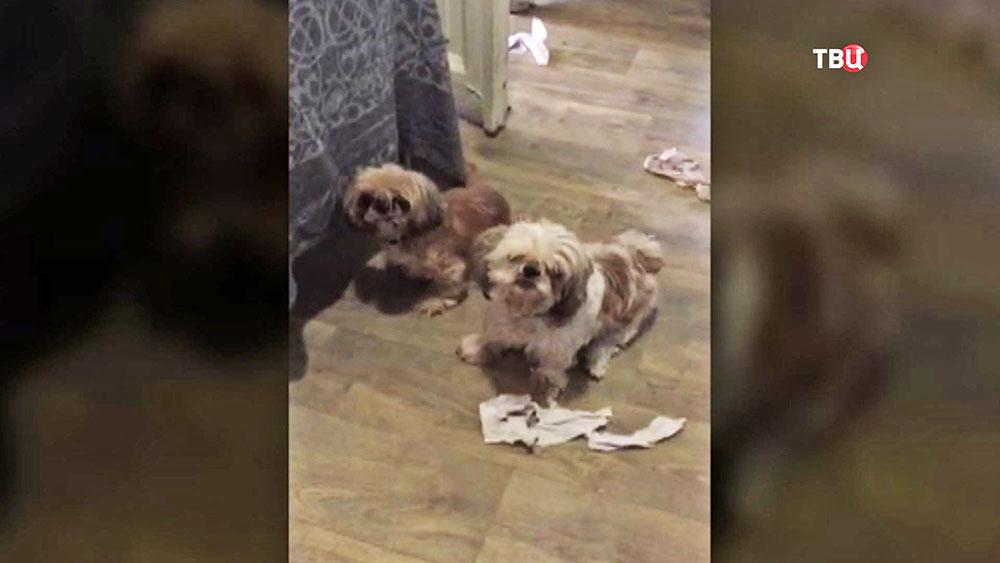 Запертые в квартире собаки