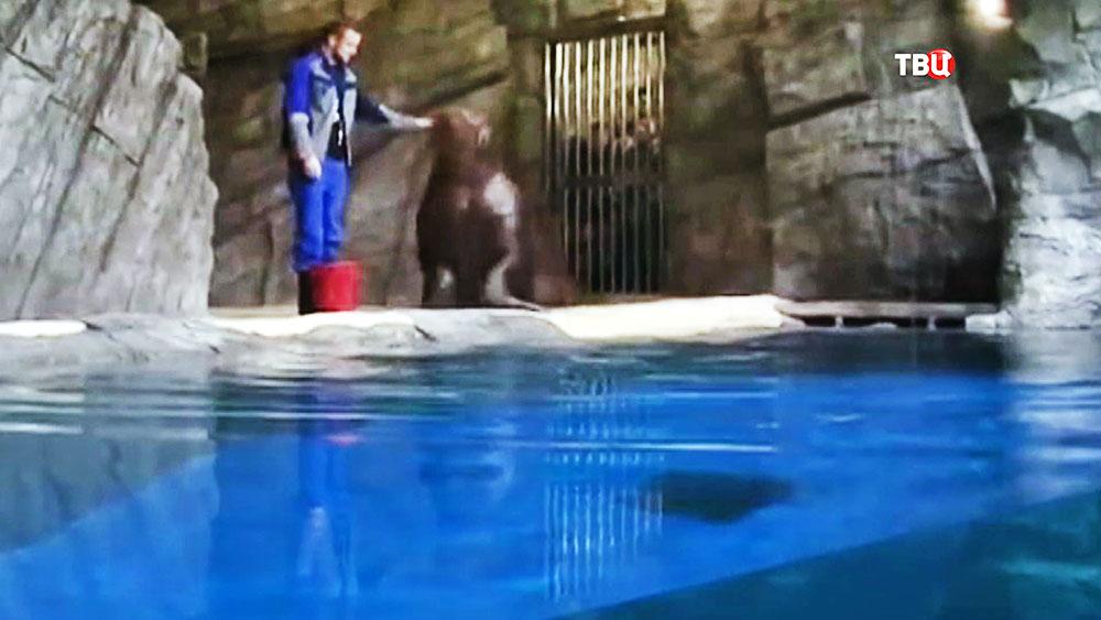 Морж в зооарке
