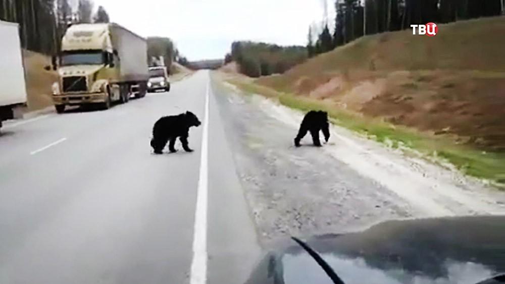 Медведи на дороге
