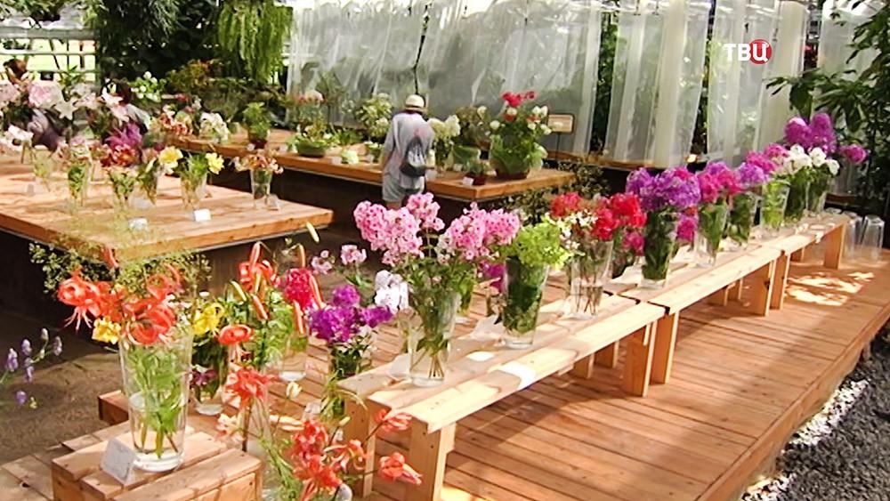Выставка лилий в Аптекарском огороде