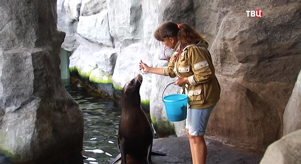 Морской львенок в Московском зоопарке