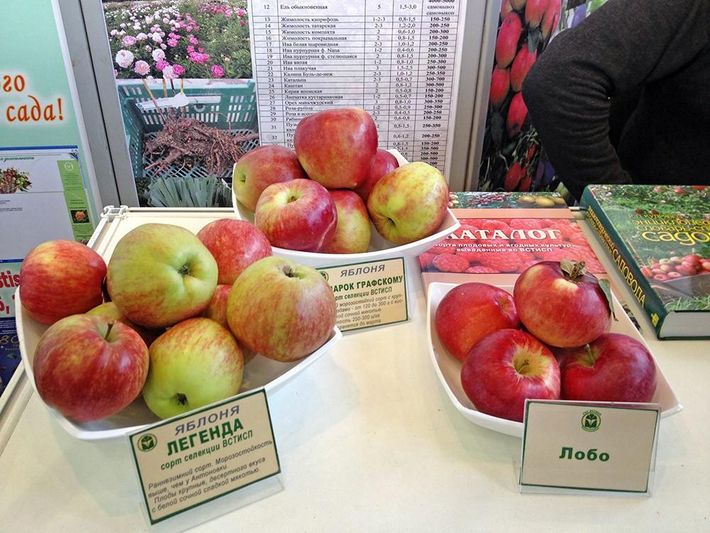 Яблоки на аграрной выставке