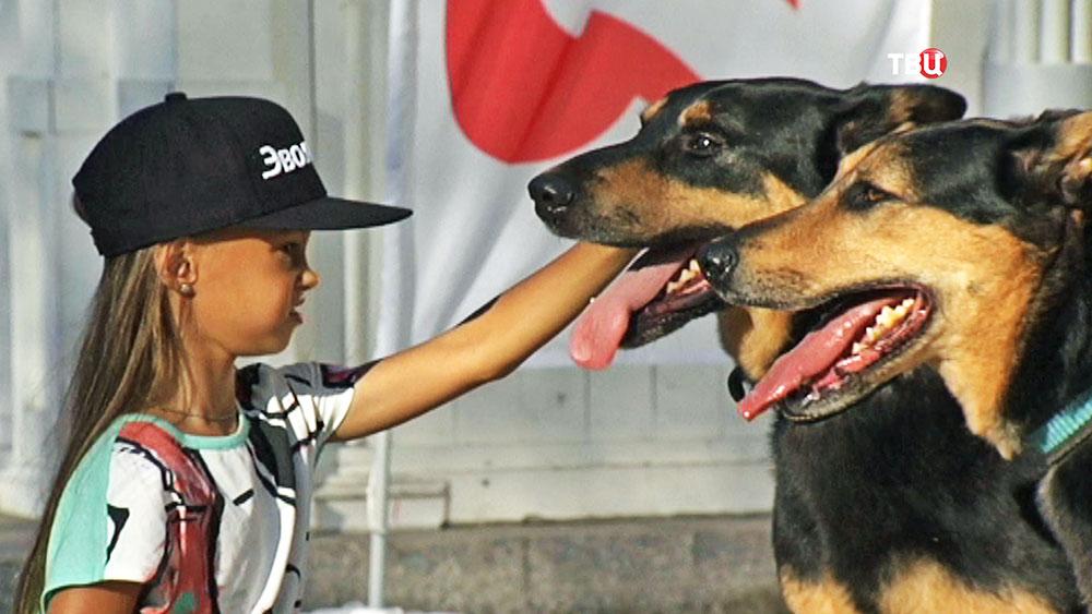 Поиск новых хозяев для брошенных собак