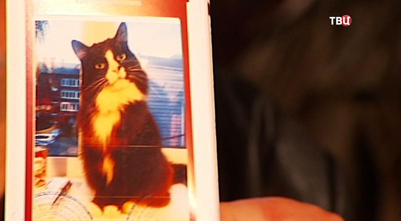Потерявшегося кота-актера Семена отыскали в столицеРФ