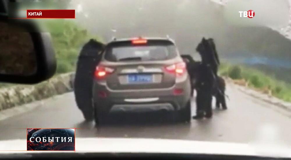4 голодных медведя остановили джип натрассе