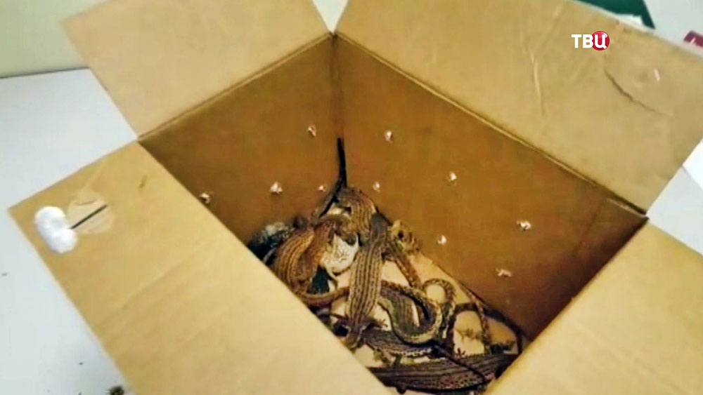 Контрабанда рептилий