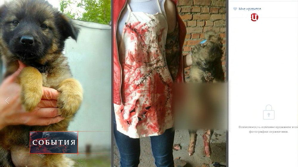 Издевательства над животными
