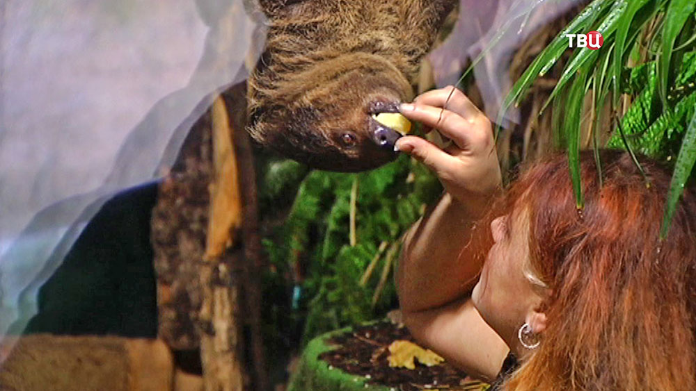 Кормление ленивца в зоопарке