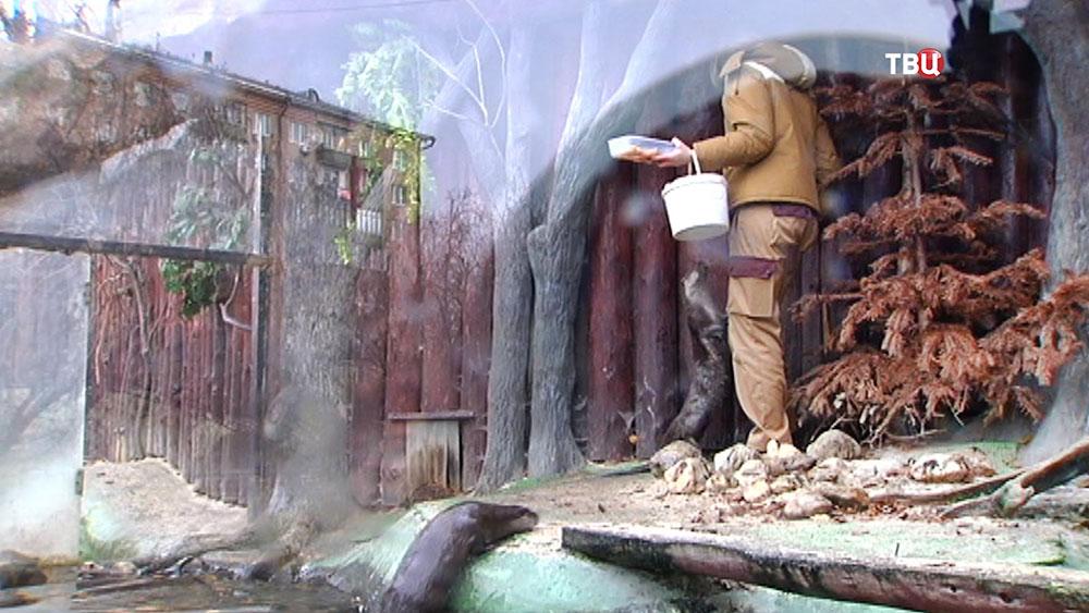 Кормление выдр в зоопарке