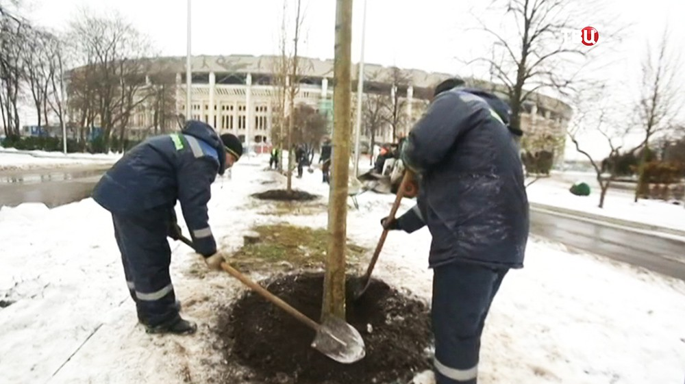 """Высадка деревьев на территории """"Лужников"""""""