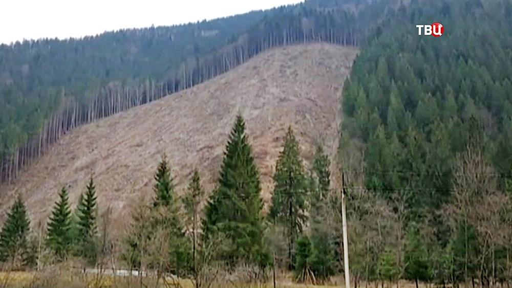 Вырубка леса на Карпатах