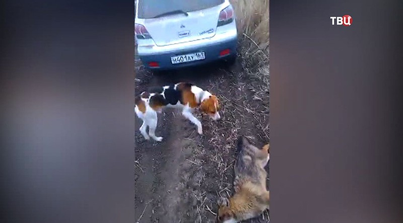 Охота на шакалов