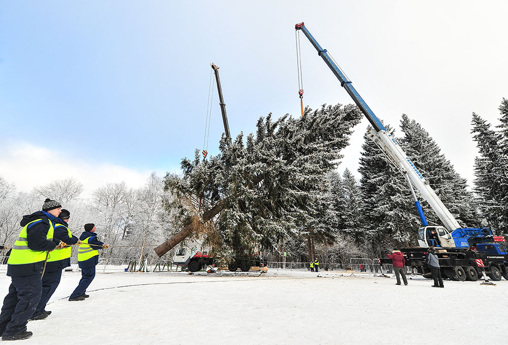 Рубка главной новогодней елки страны
