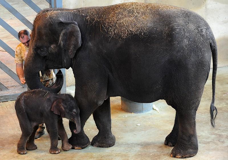 Слоненок в зоопарке Ростова-на-Дону