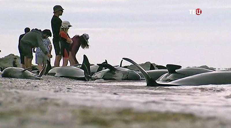 На берег выбросились дельфины в Новой Зеландии