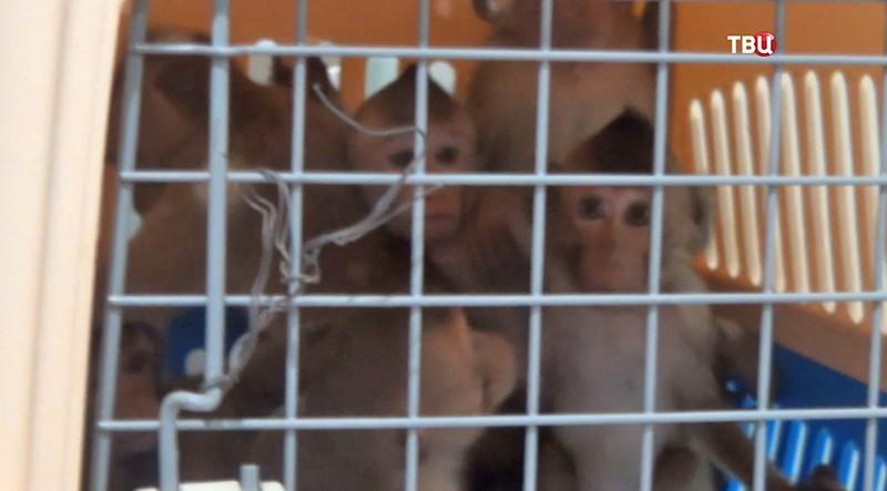 Детёныши обезьян