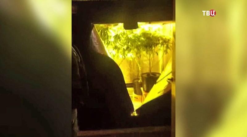 Вподмосковных Химках схвачен наркоделец с3кг марихуаны