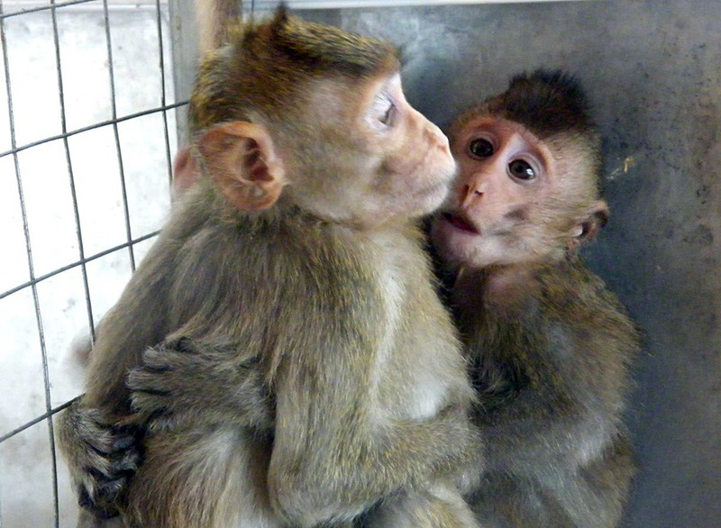 Детеныши обезьян