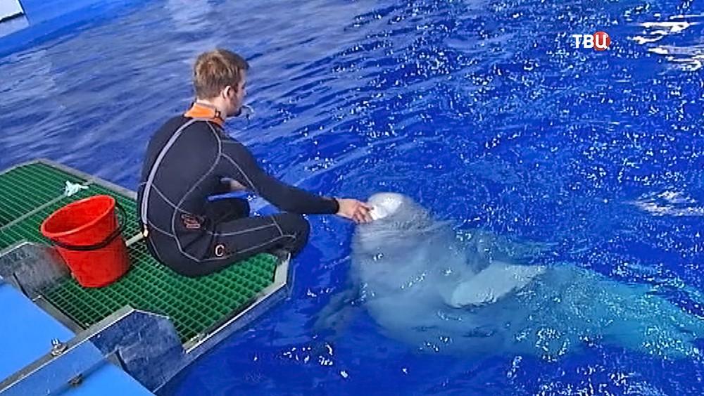 Работники дельфинария