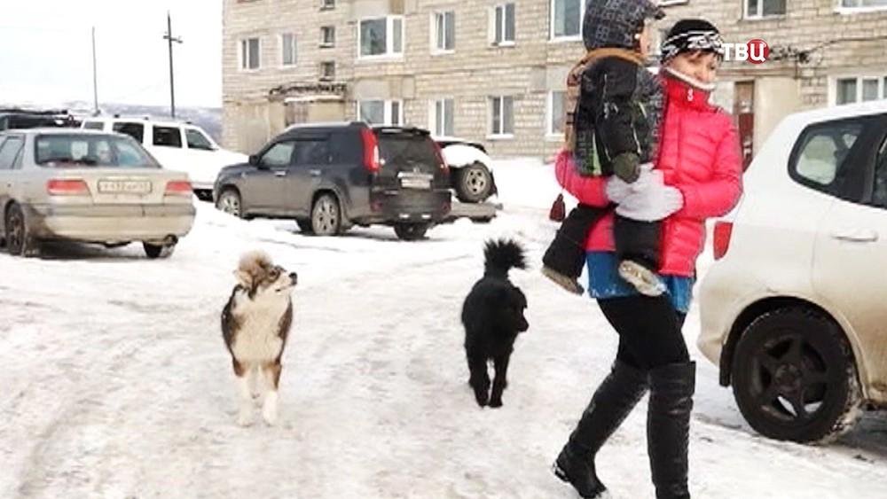 Собаки нападают на людей