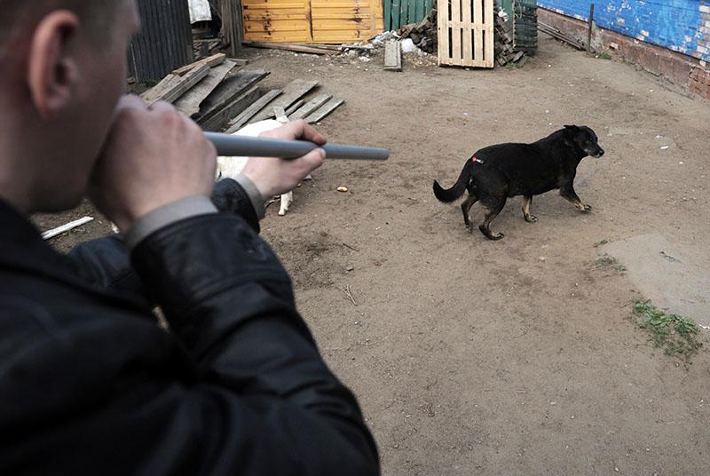 Отлов бездомных собак