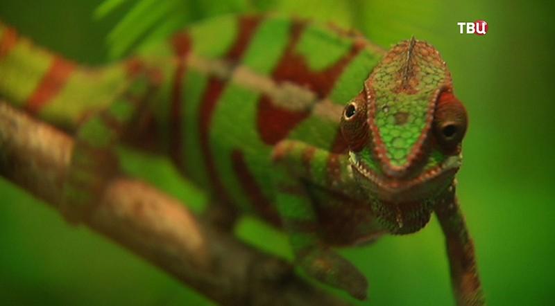 Выставка рептилий