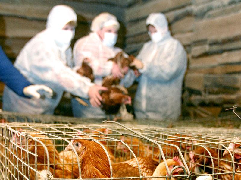 НаКубани будут усилены меры понедопущению появления птичьего гриппа