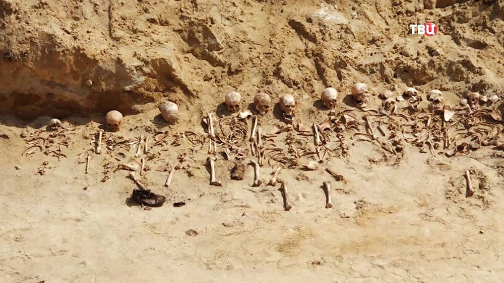 Массовое захоронение времен Второй мировой войны обнаружили на Волыне