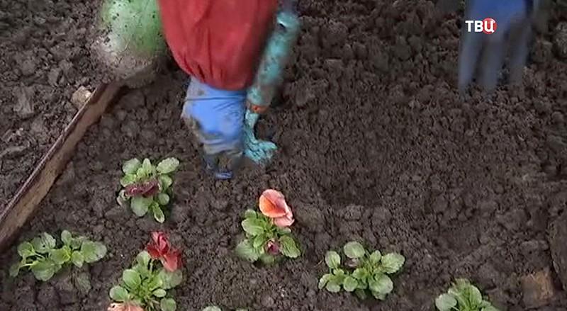 Садоводы сажают цветы